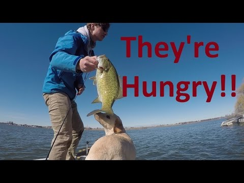 The Smallmouth bite is on! *Bass fishing Moses lake, WA*