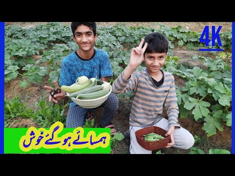 Gardening is a healthy and fruitful Activity