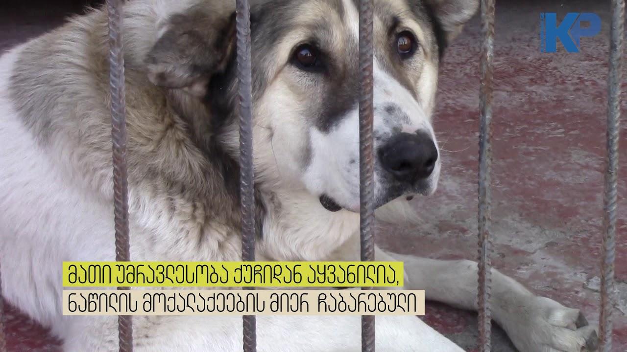 ძაღლები თავშესაფრიდან