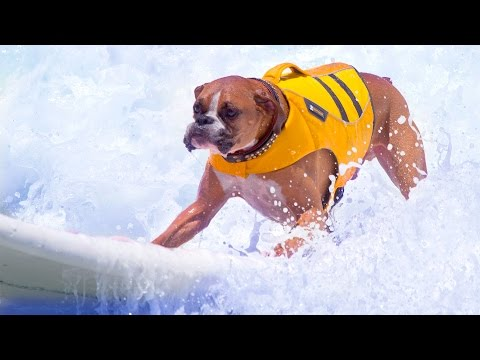 Surfing Dogs #69
