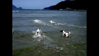 小粒の兄姉と1歳のお祝いでみんなで行った和歌山の海で遊んだよ。パートⅡ.