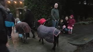 De levende kerststal 2018 Zeist  de ezels