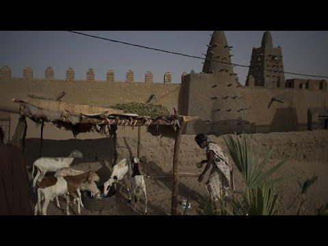 فيديو: تجار الماشية المسلمون في الساحل الإفريقي...عيد الأضحى بدون خراف…