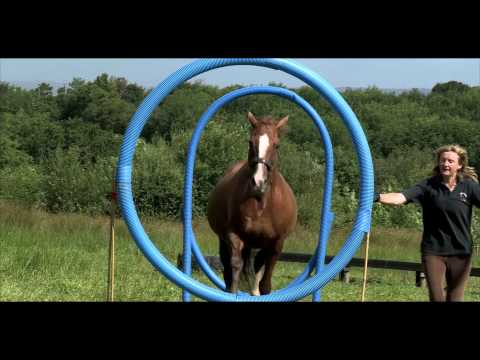 Horse Agility: A step-by-step Introduction to the Sport Official Trailer