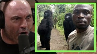 Joe Rogan | Imagine Seeing a Gorilla if They Didn't Exist