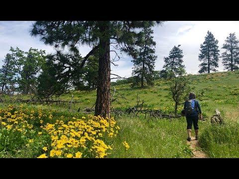 Best Columbia River Gorge Wildflower Hike Nobody Has Heard ...