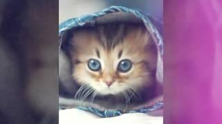Милые котята!!!!!!!!!!!!!!!!!!!!!!!!!!!!!!!!!!!!