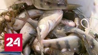 В России вводится весенний запрет на лов рыбы