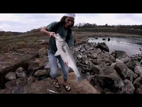 Catching MONSTER Striped Bass: Lake Whitney and Brazos RIver FIshing