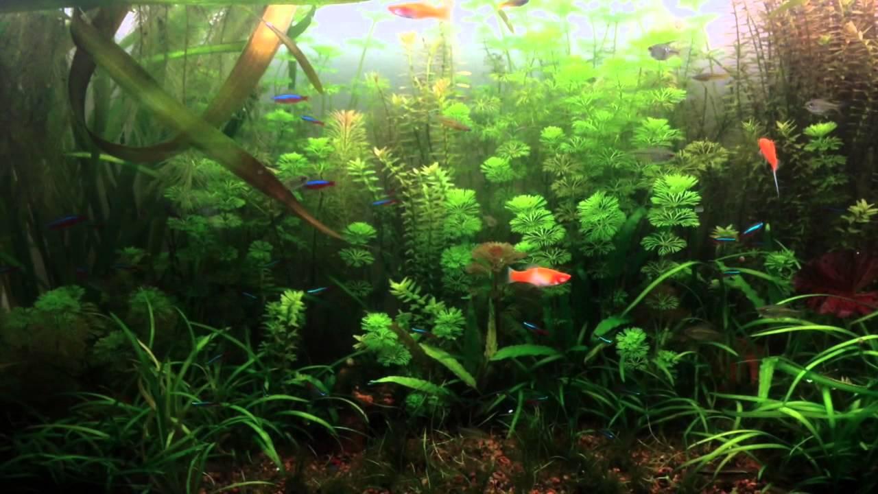 Hydrogen Peroxide Aquarium