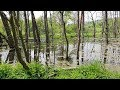 Download Video Poland is Beautiful - Beaver Dam within City Limits MP4,  Mp3,  Flv, 3GP & WebM gratis