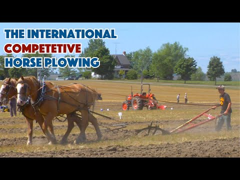 The International Documentary About Competitive Horse Plowing