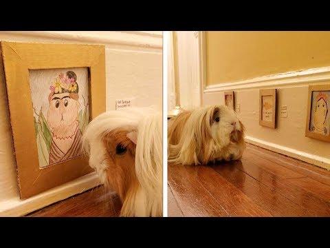 Miniature Art Gallery For Pet Guinea Pig