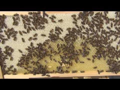 September Hive Inspection