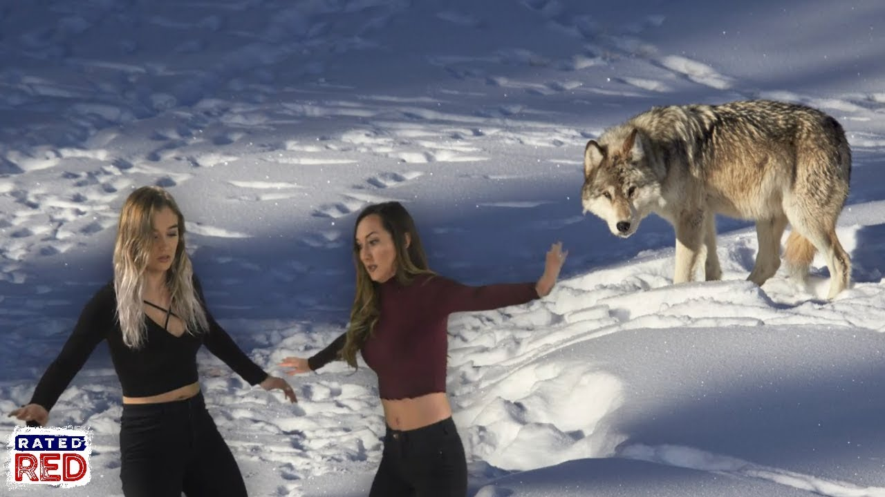 YOU'RE SCREWED: How to Outwit a Pack of Wolves