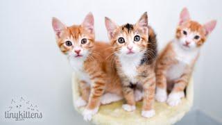 Live: Stella And Sahara's Kittens!