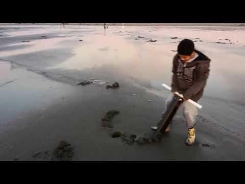 Razor clam digging Copalis Beach Washington