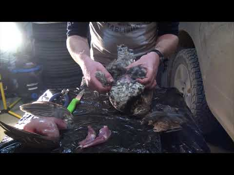 how-to-clean-a-grouse