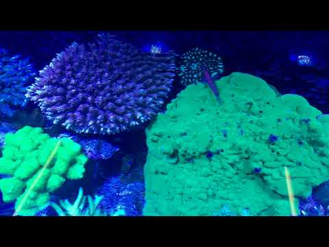 Check out this huge custom CADE display at Reeflections Aquarium in Melbourne