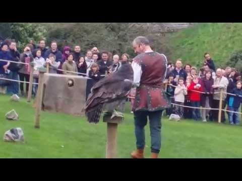 Falconry at Warwick Castle