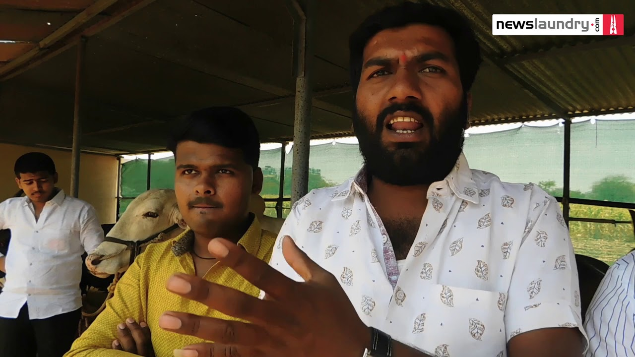 Can bullock-cart racing swing elections in Maharashtra's Shirur