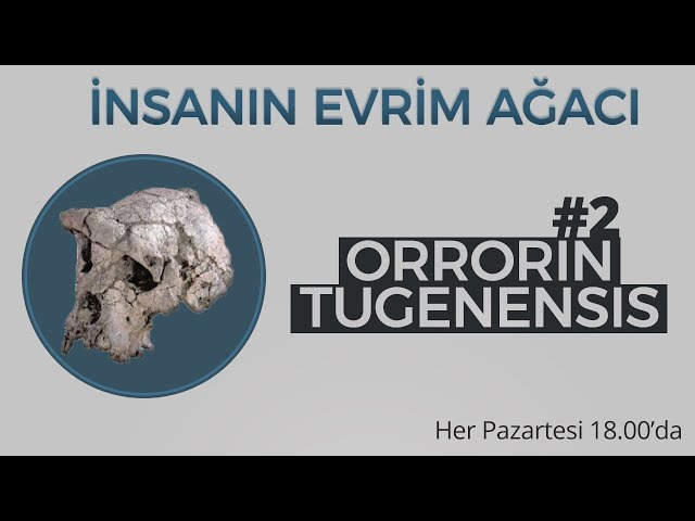 Orrorin tugenensis | ?nsan?n Evrim A?ac? #2