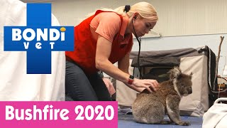 🐨 Saving Koalas In The 2020 Australian Bushfires