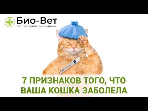 Как узнать что кот болеет