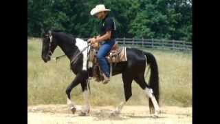 Lonesome Elvis Beginner SAFE Tennessee Walking Trail Horse Deluxe For Sale NO MUSIC