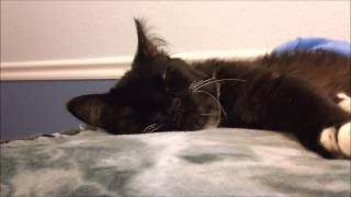 Peggy: The Story of a Disabled Kitten - please share!