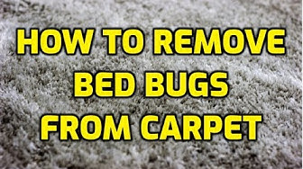 How To Remove Bed Bugs From Carpet