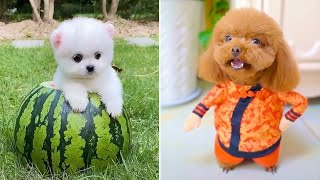 Baby Dogs 🔴 Cute and Funny Dog Videos Compilation #12 | 30 Minutes of Funny Puppy Videos 2021