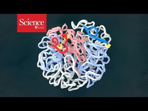 Tracking the human genome in 4D