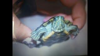 Новый аквариум для красноухой черепахи.