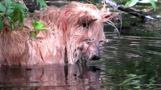 Molly Hunter, Cairn Terrier Fishing