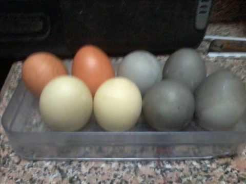 اجمل صور البيض الملون لشم النسيم روعة