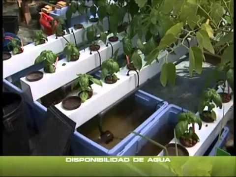 Tecnicas de cultivo de interior de cannabis parte 1 youtube for Cultivo en interior