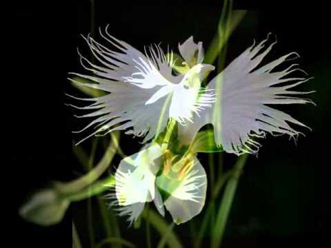 Egret white youtube egret white mightylinksfo