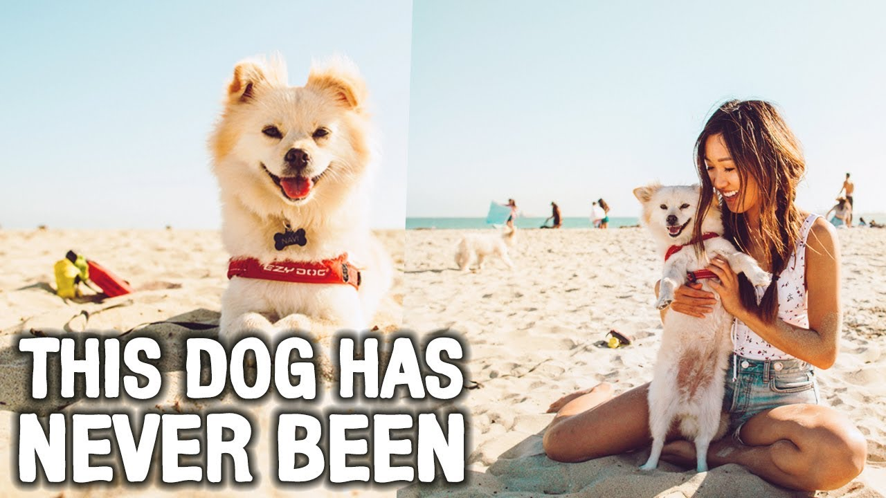 my-dog-has-never-been-to-a-beach-wahlietv-ep596