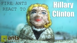 Fire Ants React to Hillary Clinton (Time Lapse)