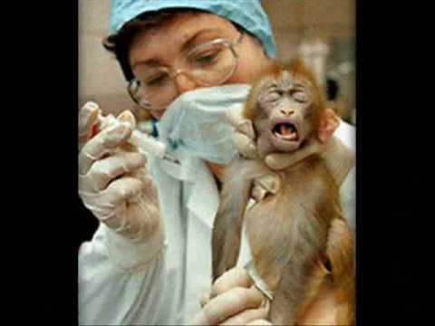 vivisection animal experimentation American anti-vivisection society working to end the use of animals in science  it would also ban the use animals testing cosmetics and their ingredients, as.