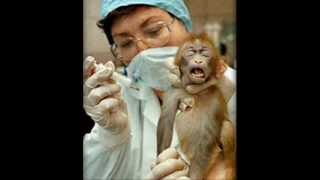 Barbaric Animal Experimentation(Vivisection)