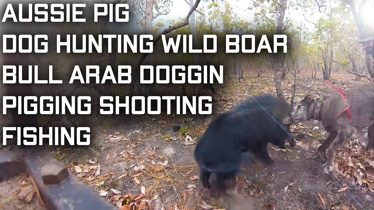 Pig Hunting With Dogs Australia