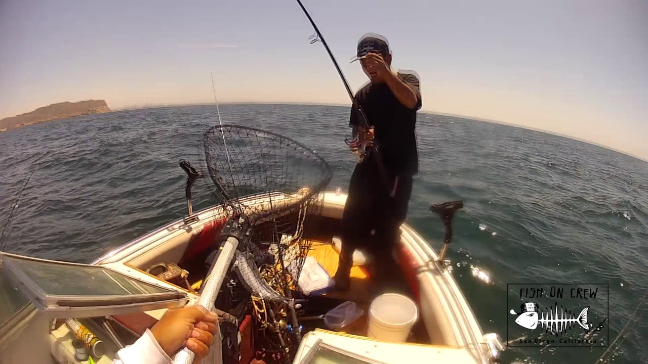 Point loma kelp beds 7 09 2016 youtube for Point loma fish counts