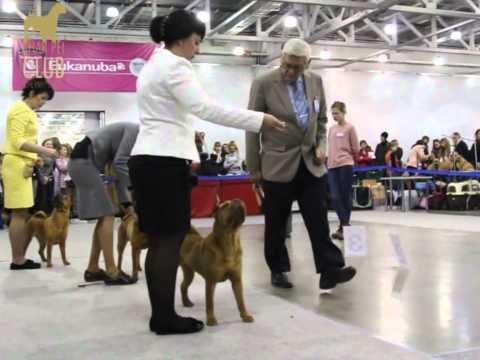 Shar Pei At Eurasia-1, 2012. Adult females classes and BOB Choice