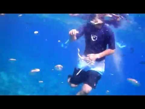 Snorkeling Molokini Crater in Maui