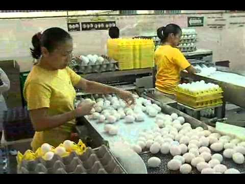 Conoce el proceso de producción del Huevo
