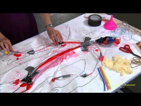 Engineering A Model Circulatory System Science Snack