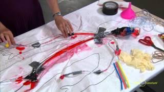 Engineering a Model Circulatory System | Science Snack Activity | Exploratorium