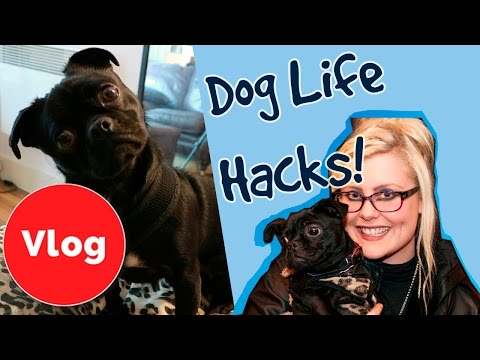 top-10-life-hacks-for-dog-owners!-plus:-competition!